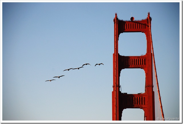 Golden Gate_04