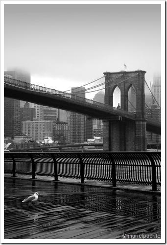 Brooklyn Bridge & gavina