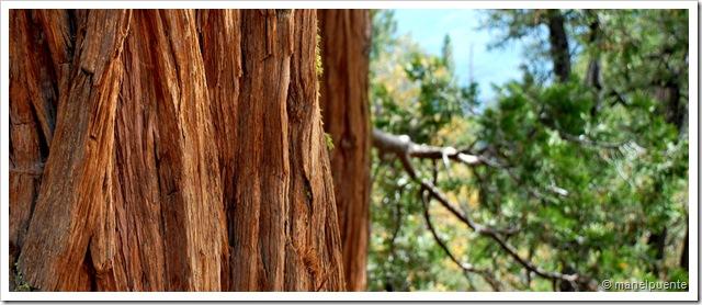 textura arbres
