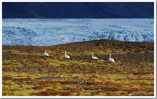 Parc Nacional Skaftafell