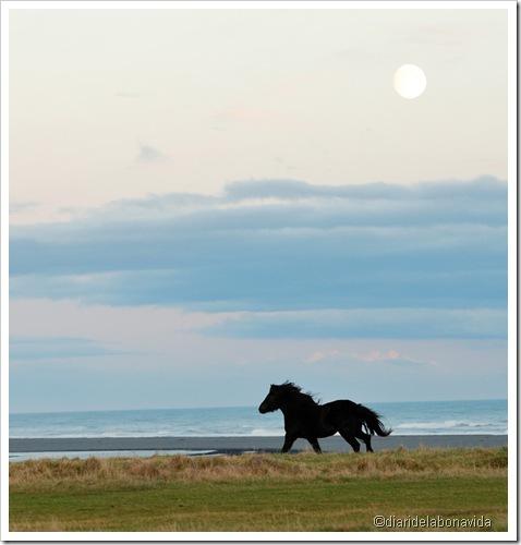 cavall sota la lluna