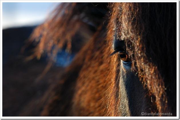 mirada del cavall