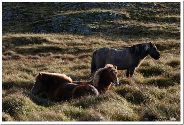 cavalls descansant