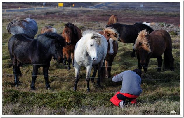 fotografiant cavalls