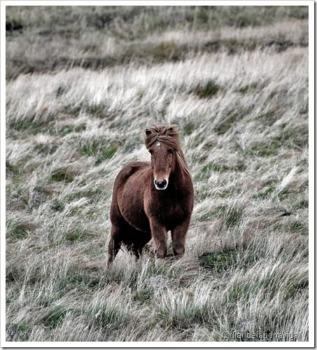 cavall solitari