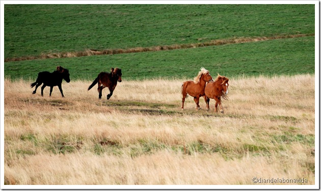 cursa de cavalls