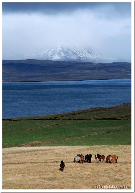cavalls sota el volcà