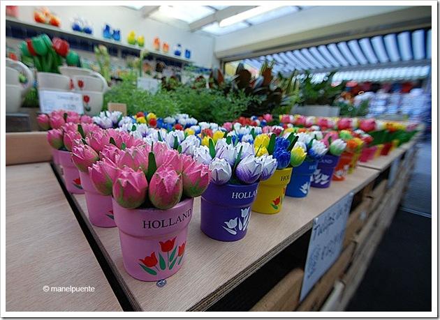 tulipans_amsterdam
