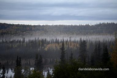 La llum marxava, i els boscos agafaven un aire fantasmagòric