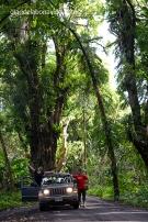 Recorriendo en coche la isla de Big Island