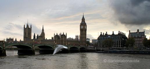 london_cris_102_DBV