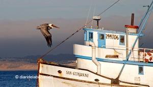 Puerto de Monterey