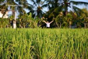 Las terrazas de arroz son muy fotogénicas