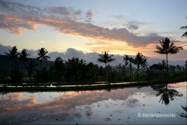 indonesia_3208